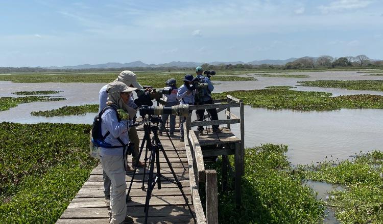 Las aves migratorias acuáticas en Panamá