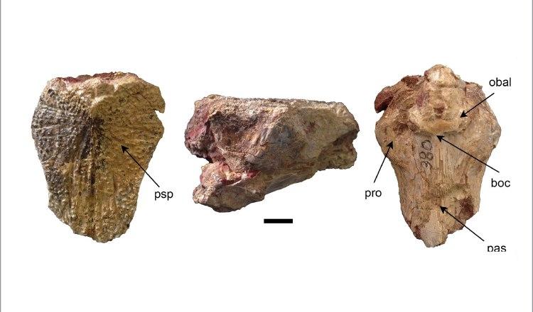 Descubren bagres en Panamá de más 23 millones de años