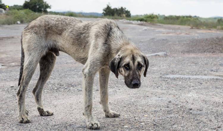 Leyes no han  frenado la crueldad contra los  animales domésticos en Panamá