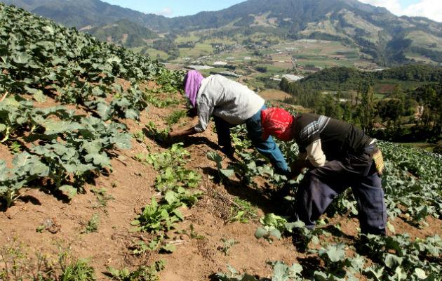 ONU: La crisis alimentaria del Corredor Seco Centroamericano es