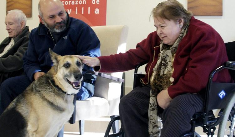 Animales: Terapeutas de cuatro patas