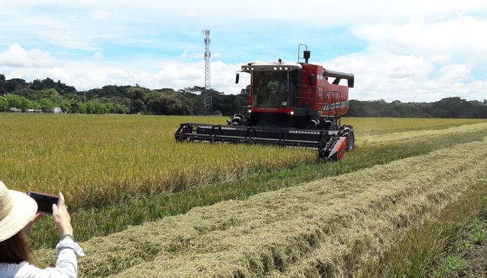 Productores de arroz en Chiriquí anuncian protestas contra el Gobierno