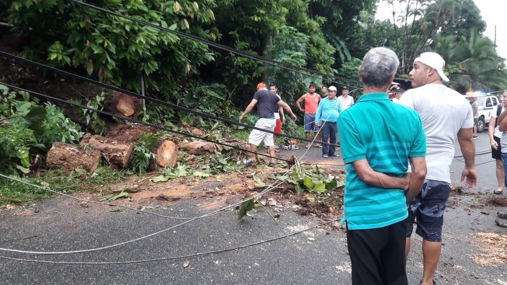 Hubo varios árboles derribados a lo largo de la carretera. Foto/Diómedes Sánchez