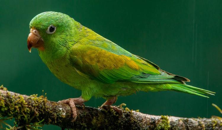 Oportunidad para conocer sobre las aves de la ciudad