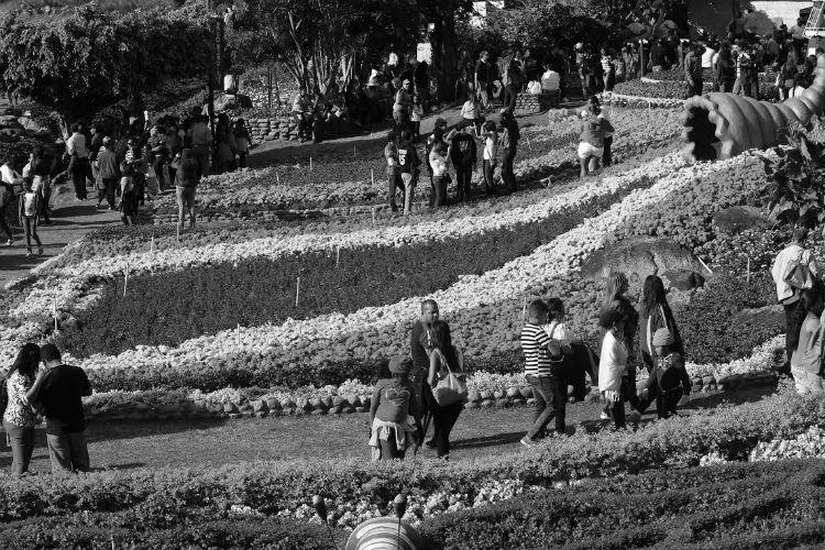 La Feria de las Flores y del Café