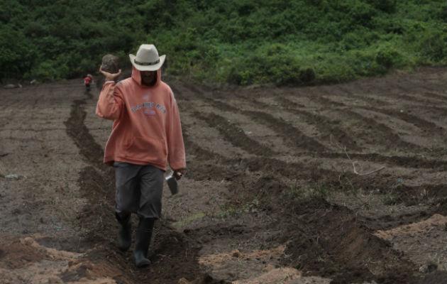 Importación sigue siendo el mayor problema del sector agropecuario