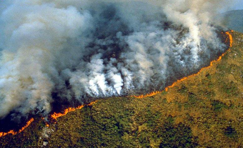 #PrayForAmazonas, celebridades se pronuncian por el incendio en el Amazonas