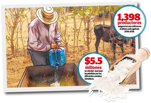 Secuelas 'nefastas' para el agro si  sequía se extiende