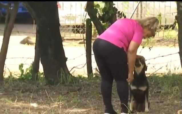 Autoridades en Chiriquí investigan la agresión a un canino en el sector de calle 8 David