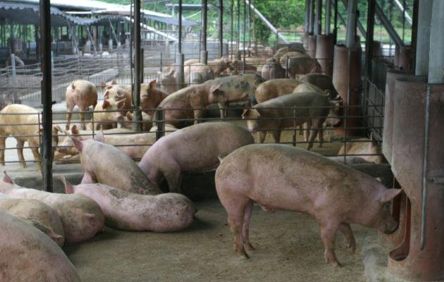 Productores de carne de res y cerdo reportan $52 millones en pérdidas económicas