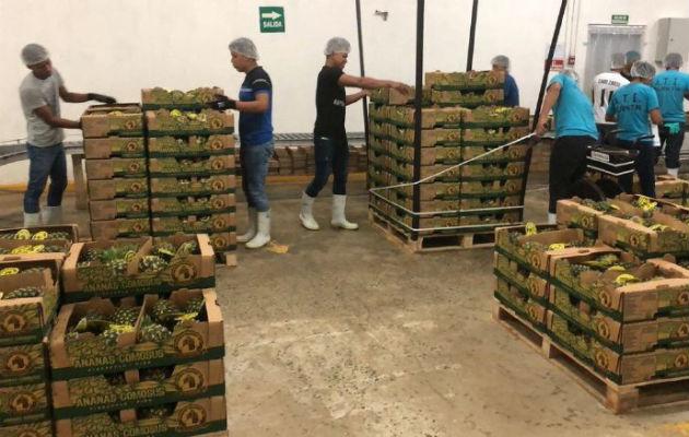 Esperan repunte en las exportaciones de piña, por el envío de primeros contenedores a China