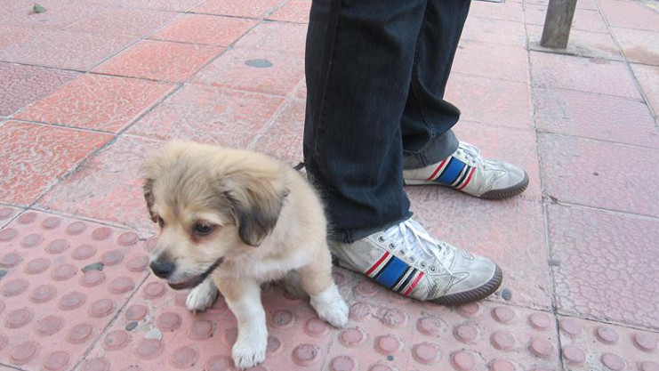 Temor en Tocumen por ataques de una banda de roba mascotas
