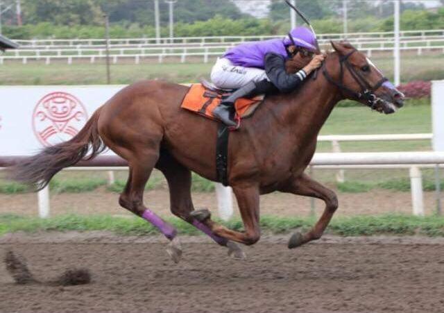 Confirman a José Lezcano para montar al caballo panameño Turpin Time en el Caribe