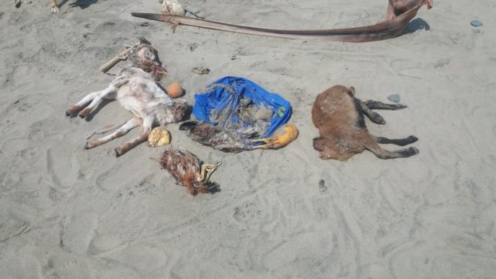 Realizan rituales satánicos en una concurrida playa de Mariato