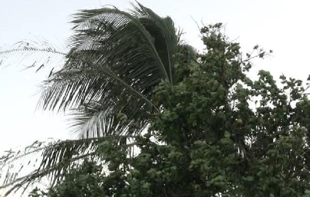 Varias regiones de Chiriquí fueron afectadas por fuertes ráfagas de viento