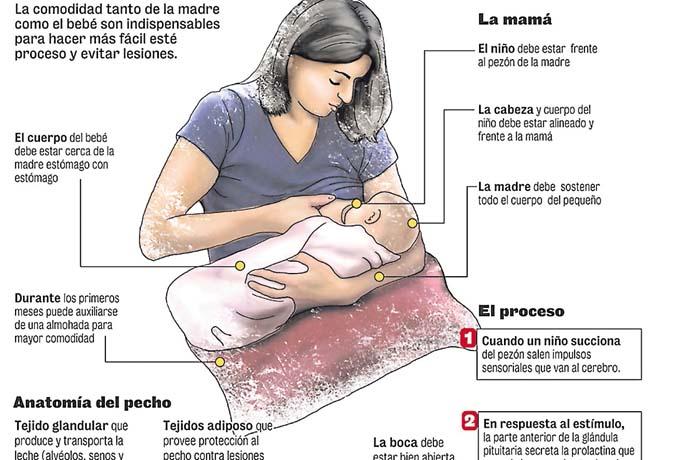 Importancia sobre la leche materna