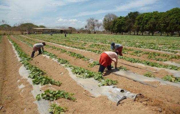 90% de los agricultores del país están en el abandono