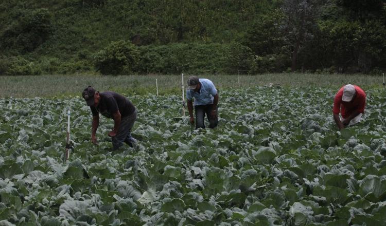 Los primeros 5 meses de este año se importaron 4,920 millones de dólares y exportamos $212 millones en comida, según el exministro del Mida, Jorge Arango. /Foto Archivo