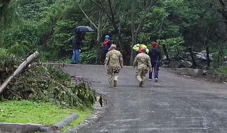 Varios árboles cayeron por el viento en la provincia caribeña. /Foto Mayra Madrid