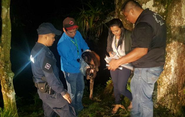 Mi Ambiente investiga la muerte de un mono aullador en Puerto Armuelles