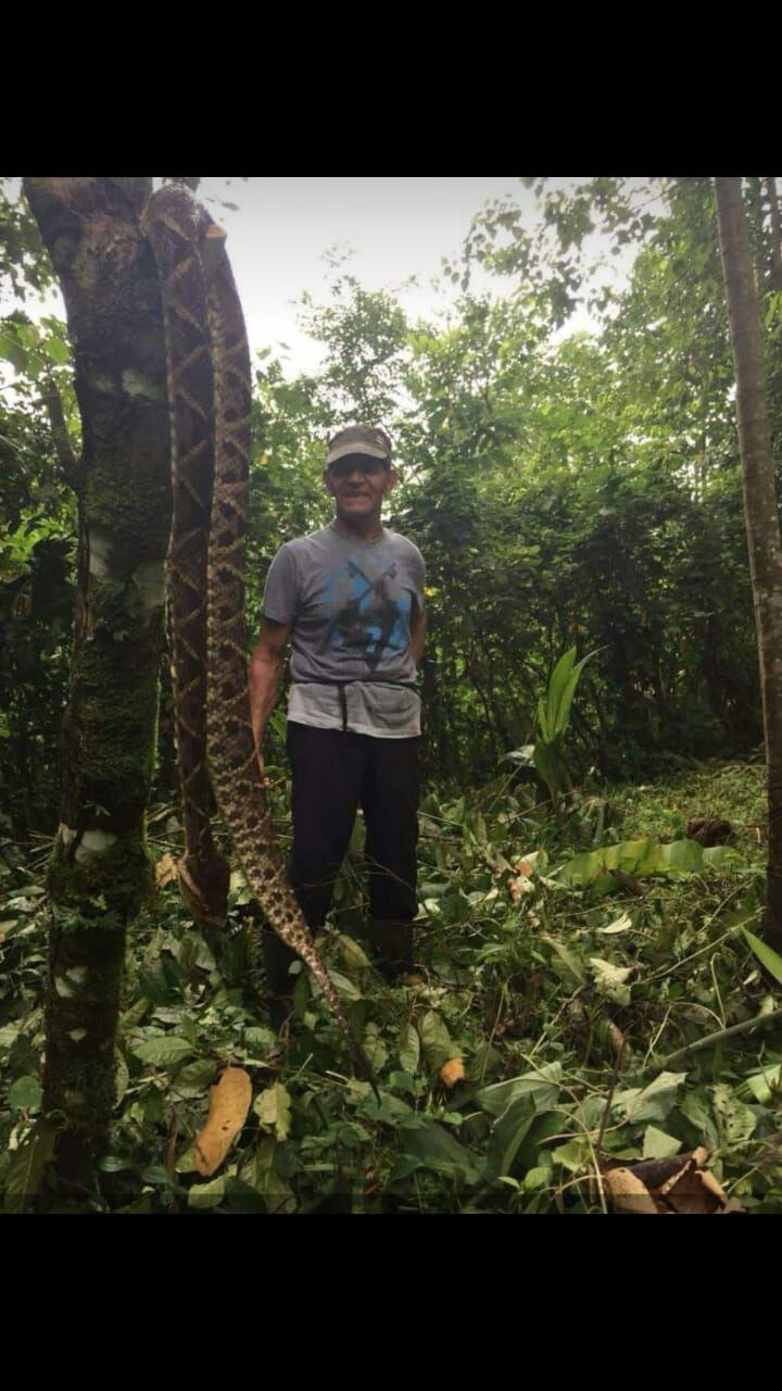 Serpientes mantienen atemorizada a la población de Gariche en Chiriquí