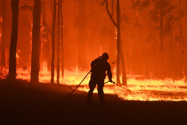 Fallece Lewis, el koala rescatado durante los feroces incendios de Australia