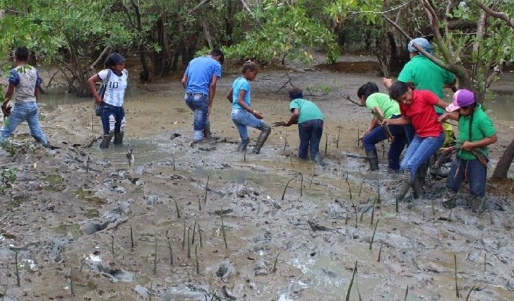 Buscan garantizar sostenibilidad del manglar en Chame