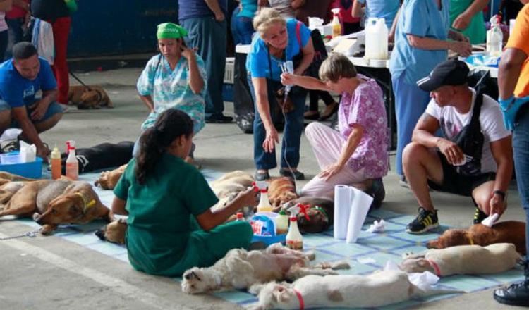 Alcaldías destinarán un 2.5% de sus fondos a Bienestar Animal