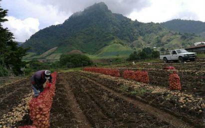 Ejecutivo busca impulsar el sector agropecuario con la aprobación de nuevas acciones