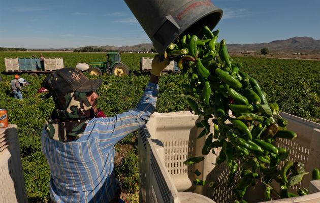 Decae el producto 'picoso' de Nuevo México, debido a la sequía