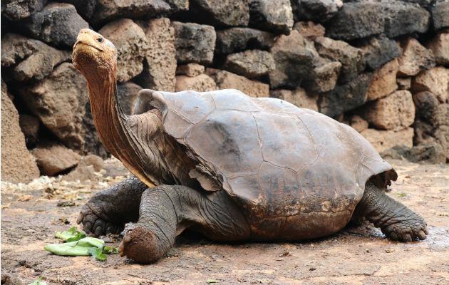 Tortuga que ayudó a su especie se jubila