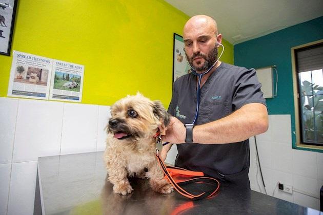 Luego del brexit, las mascotas que pueden ser afectadas por el