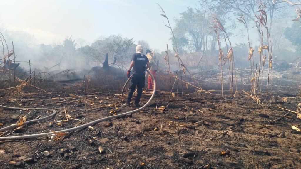 Incendio en maizal deja grandes pérdidas para los productores de Los Santos