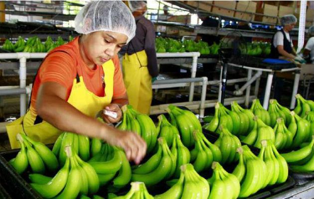 Hace 5 años atrás, Panamá exportaba 1,300 millones de dólares anuales; sin embargo, al día de hoy, por diferentes razones, solo se exportan un poco más de 600 millones de dólares.