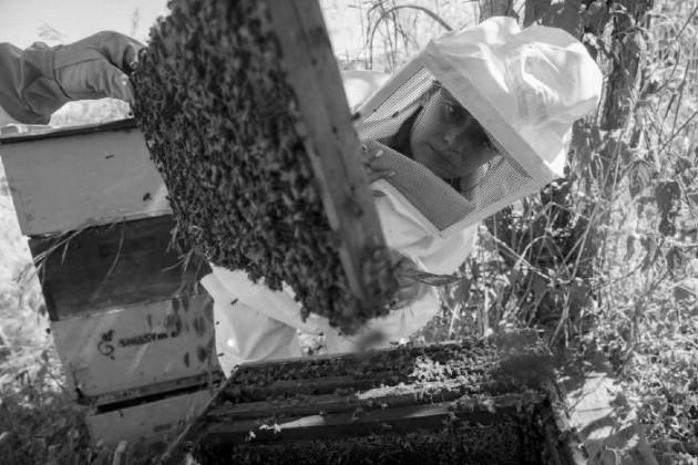 Pedir perdón a las abejas