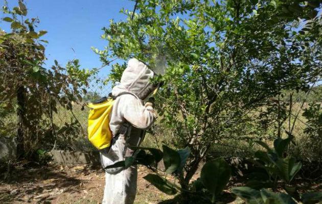 Bomberos en alerta por incremento de llamadas por presencia de abejas africanizada