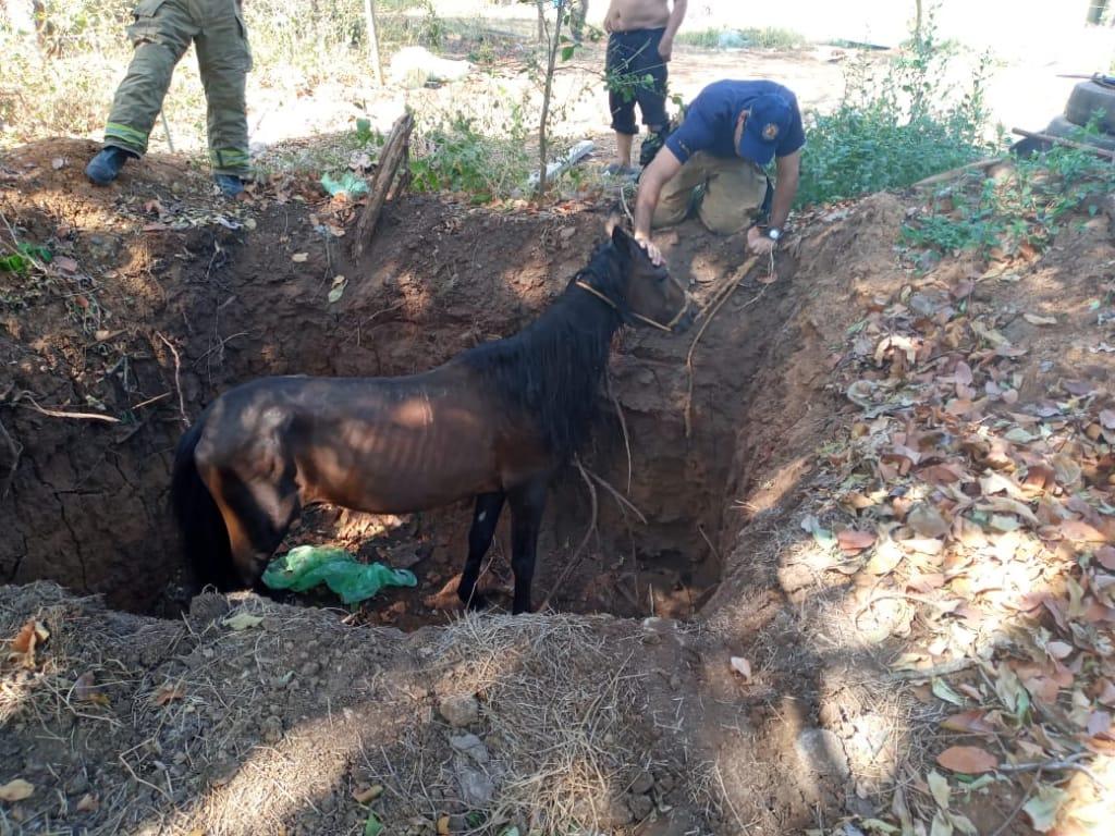 Bomberos rescatan a un caballo que cayó en un hueco en Los Santos