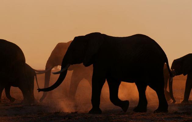 Programas de televisión sobre animales y naturaleza vuelve a ser un éxito