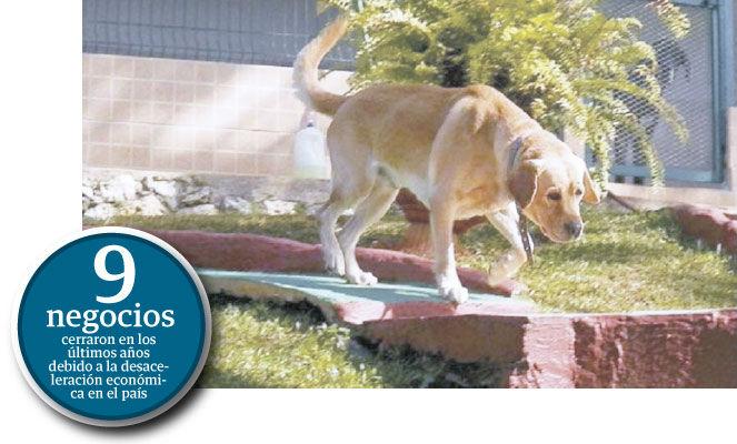 Negocio para atender a  perros cae 30 por ciento