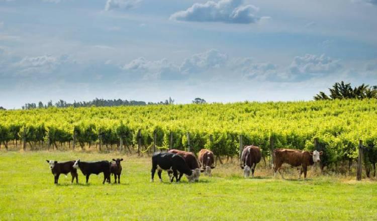 Carne, soja, gas y vino, los oasis de crecimiento de la economía argentina