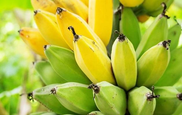IICA y FAO definen agenda para prevenir hongos y plagas en Centroamérica