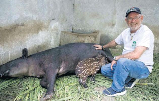 Nace en zoológico nica  una tapir en cautiverio