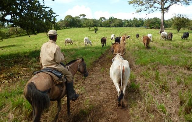 Productores venden el ganado a precios de 'ruina y quiebra'