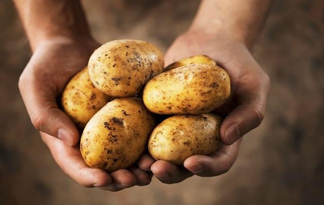 Suministro de papas está garantizado el resto del año por aporte de importadores y productores locales