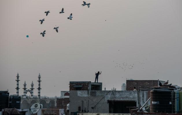 Cometas hieren a las aves en India