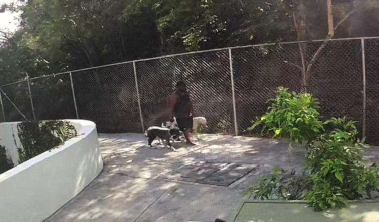 Un video capta al dueño de los perros huyendo, tras el ataque. Cortesía