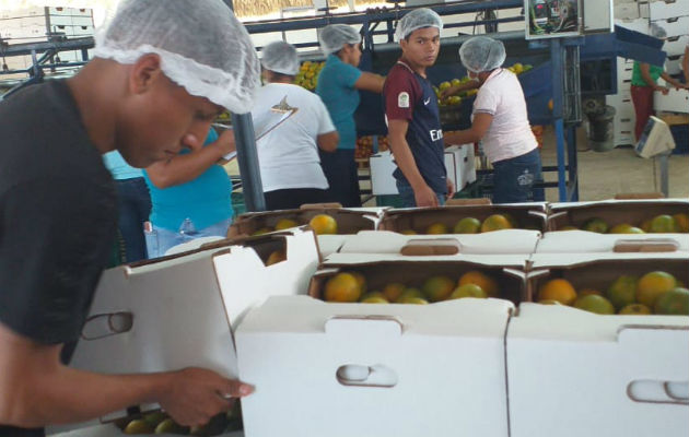 Panamá exporta naranja hacia el Caribe por primera vez
