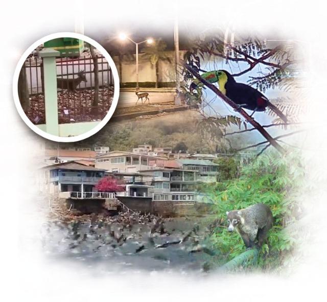 Animales llegan a ciudades por baja presencia de humanos