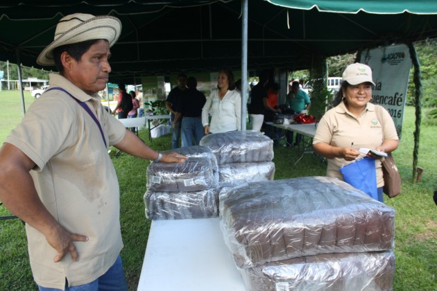 Comercialización del café de las zonas de cultivo del distrito de Capira está paralizada