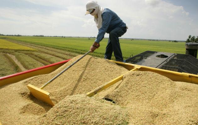 Augusto Valderrama: 'En nueve meses no hemos importado un sólo grano de arroz'